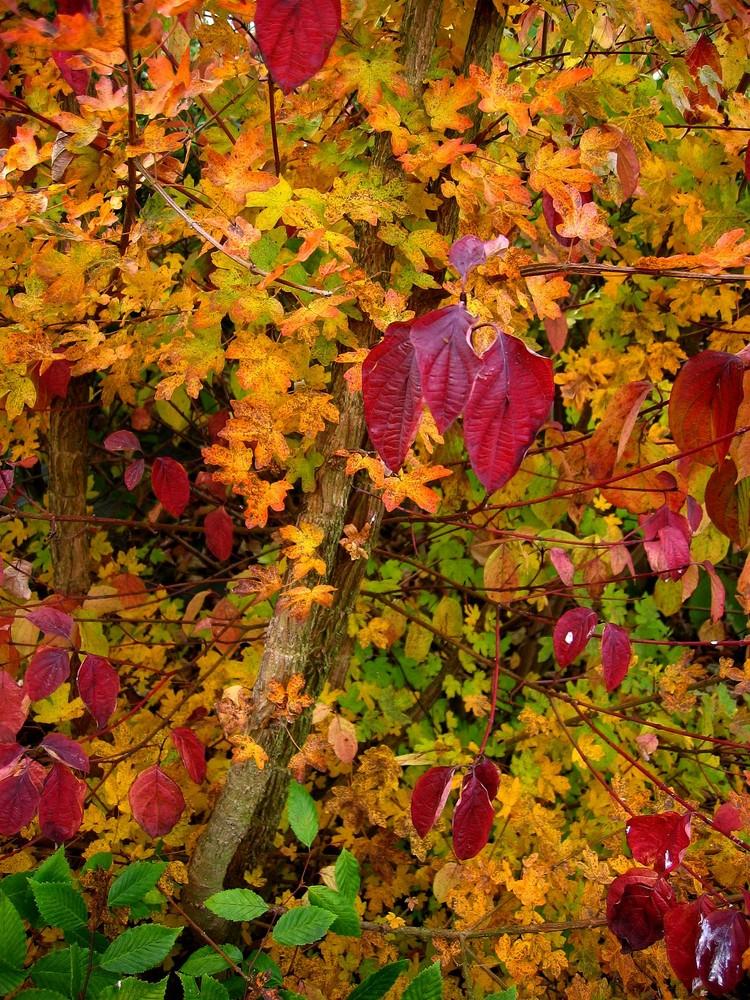 Mon jardin d'automne6