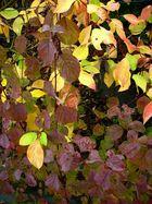 Mon jardin d'automne7