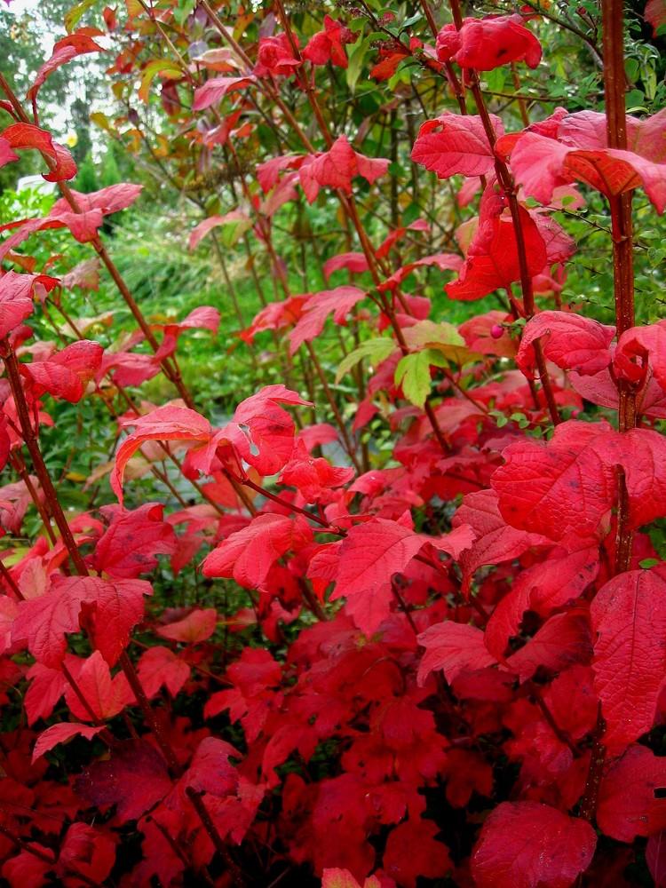Mon jardin d'automne8