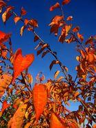 Mon jardin d'automne9