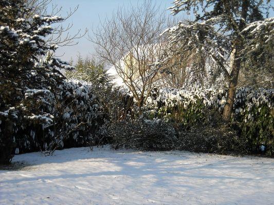 Mon jardin. Janvier 2009