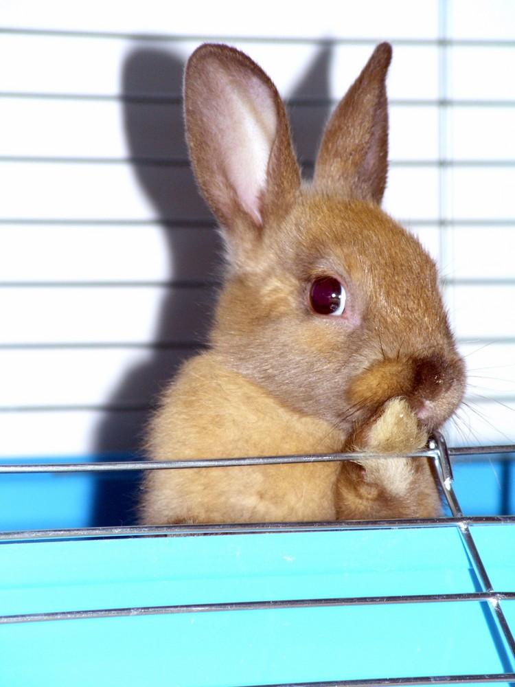 Mon lapin Grignotte