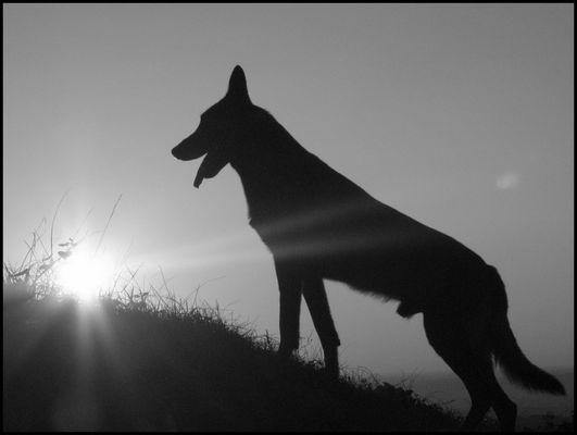 Mon loup...