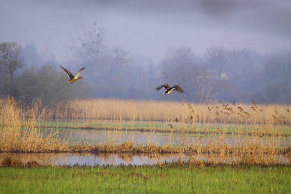 mon marais et ces oiseaux