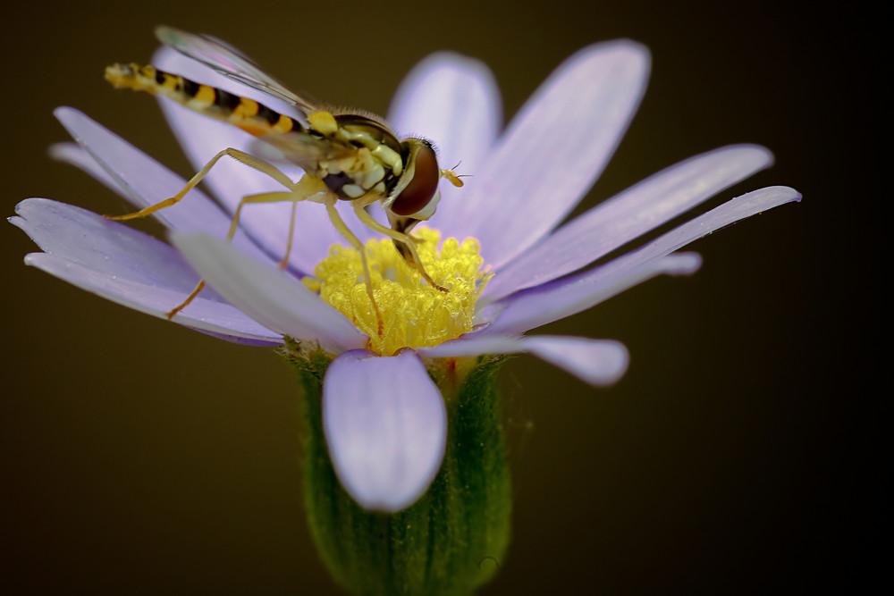 Mon nectar préferré