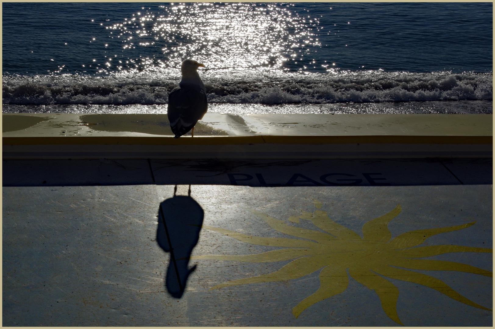 """""""mon ombre aussi prend le soleil..."""""""