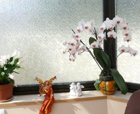 Mon orchidée c'est la troisieme année qu'il fleurit !