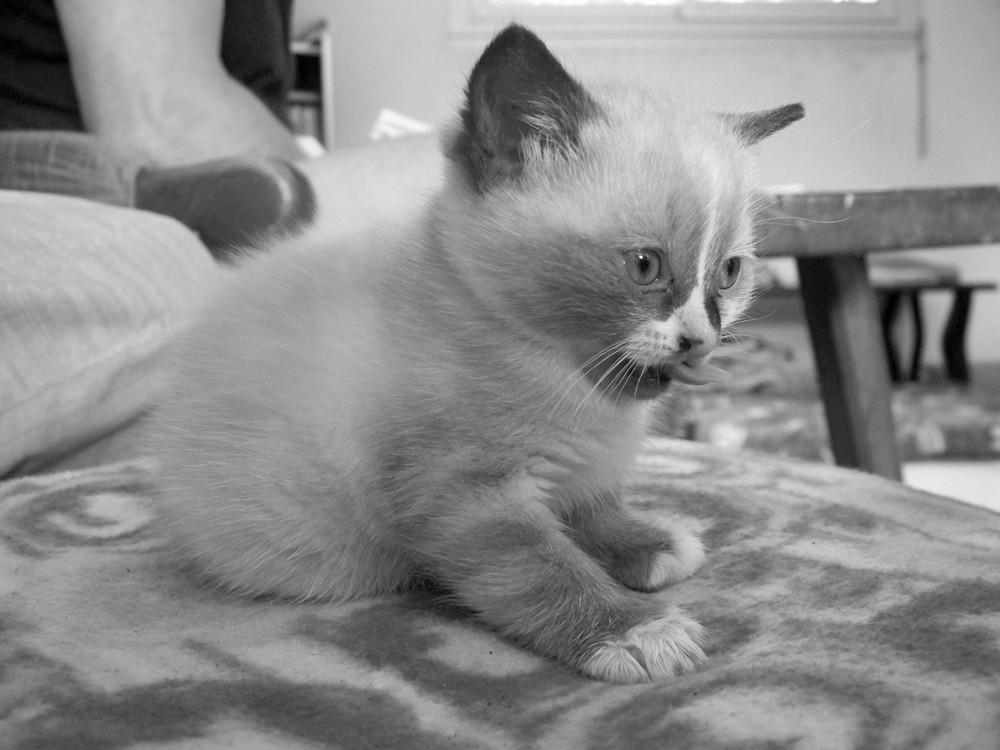 mon petit cat