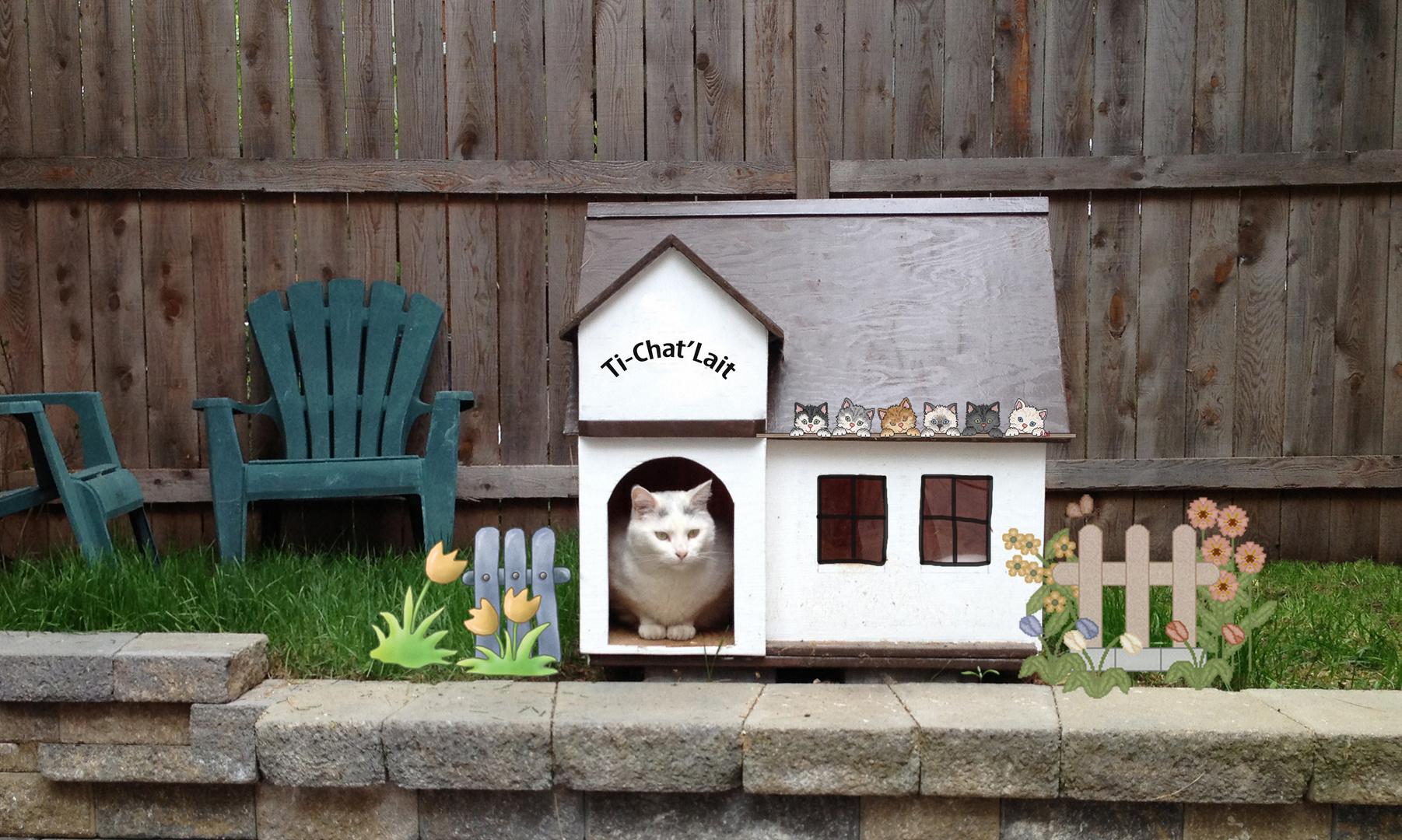 mon petit chalet au canada photo et image animaux animaux domestiques chats images fotocommunity