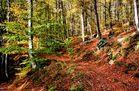 mon petit chemin forestier...