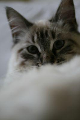 mon plus beau portrait de chat