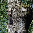 Mon premier écureuil
