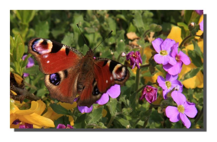 mon premier papillon 2009