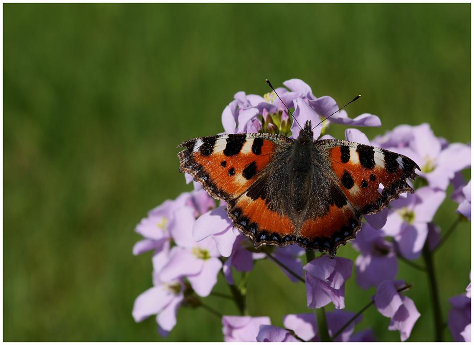 Mon premier papillon 2010 ....