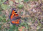 Mon premier papillon