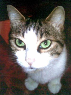Mon ptit chat!!
