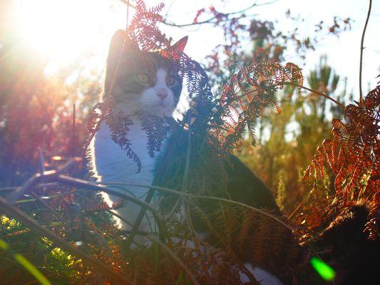 Mon rayon de soleil
