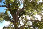 mon voisin l'arbre..