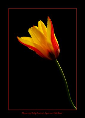 Mona Lisa Tulip Portrait
