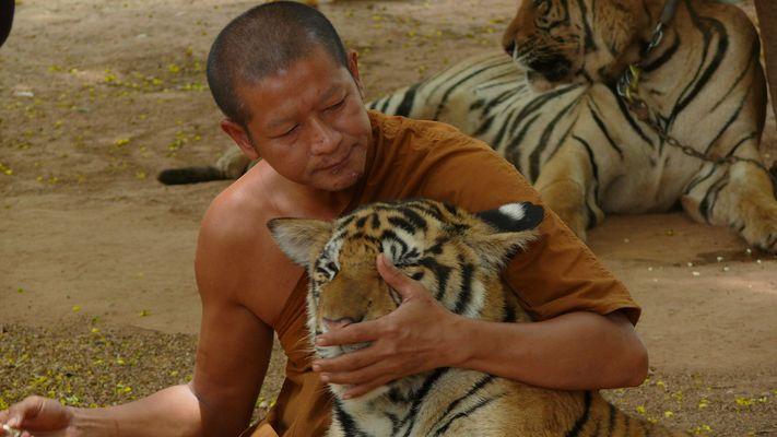Monacie tigri