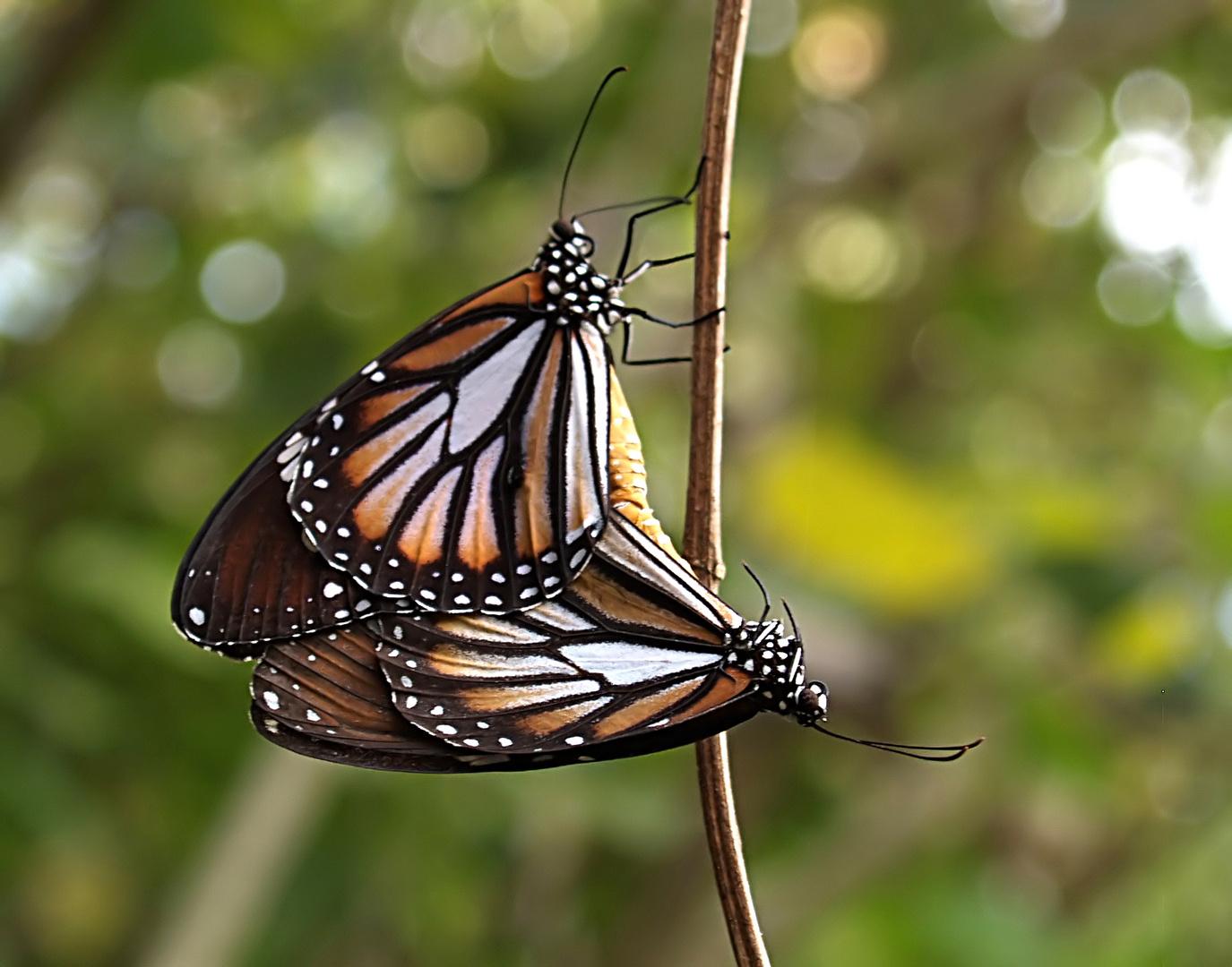 Monarchen & Verwandte - 7 - Thronfolge