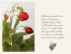 Monatserdbeeren oder Walderdbeeren...