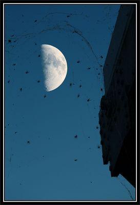 Mond der Spinnen
