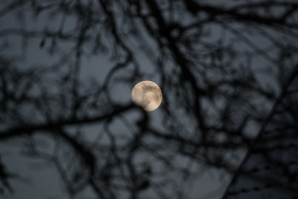 Mond hinter verschwommenen Ästen