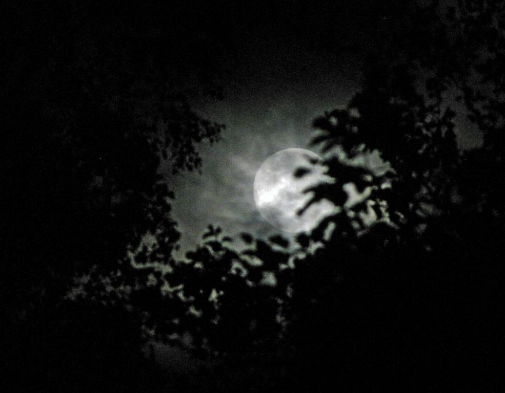 Mond hinter Zweigen