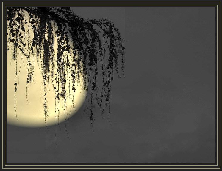 Mond-Illusion