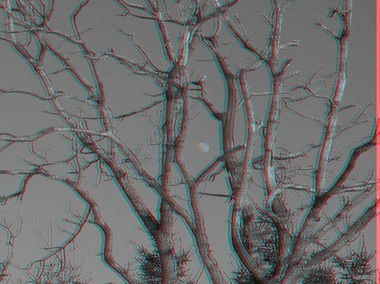 Mond im Baum
