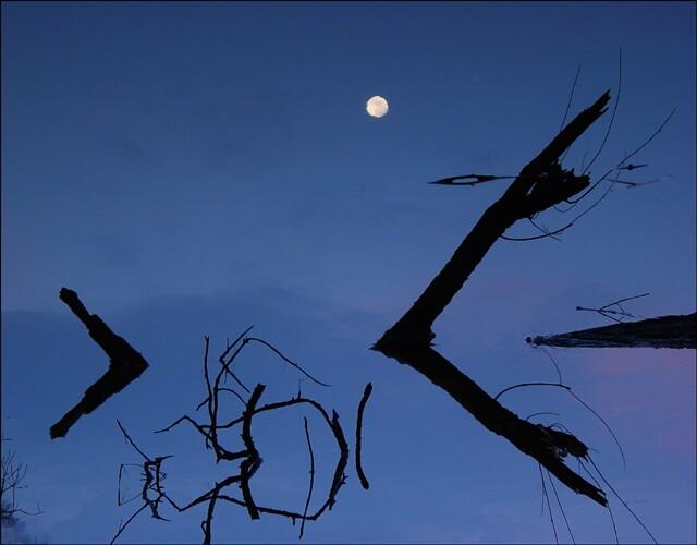 Mond im Kupferteich