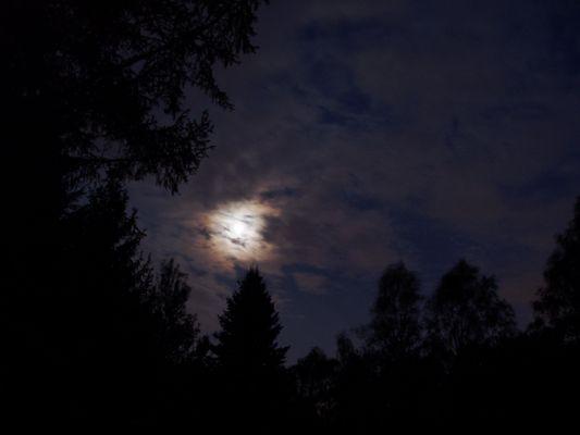 Mond im Moor
