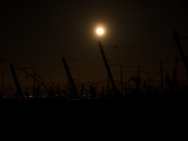 Mond in den Weinbergen