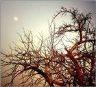 Mond in Mainaschaff