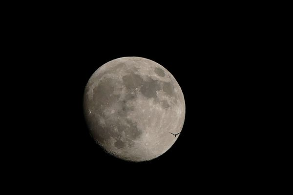 """Mond mit """" Fledermaus od.Vogel"""""""