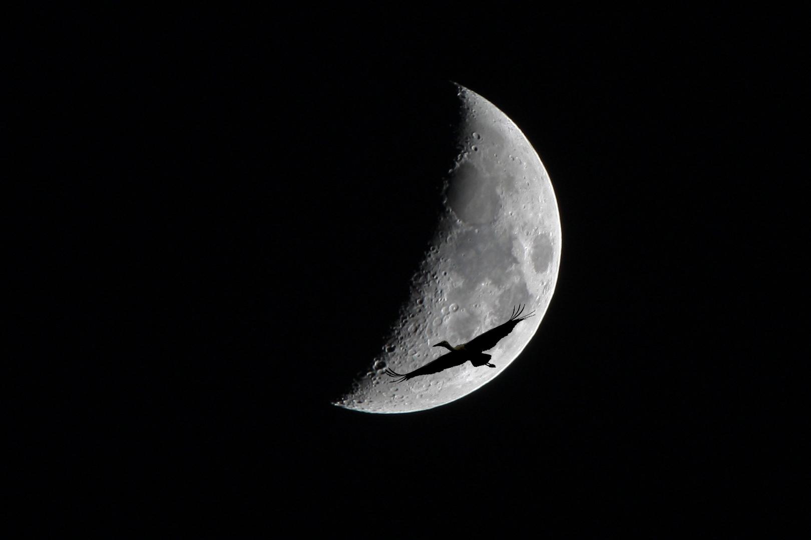 Mond mit Storch