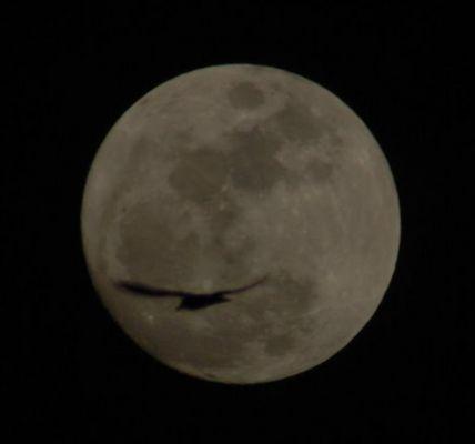 Mond mit Vogel