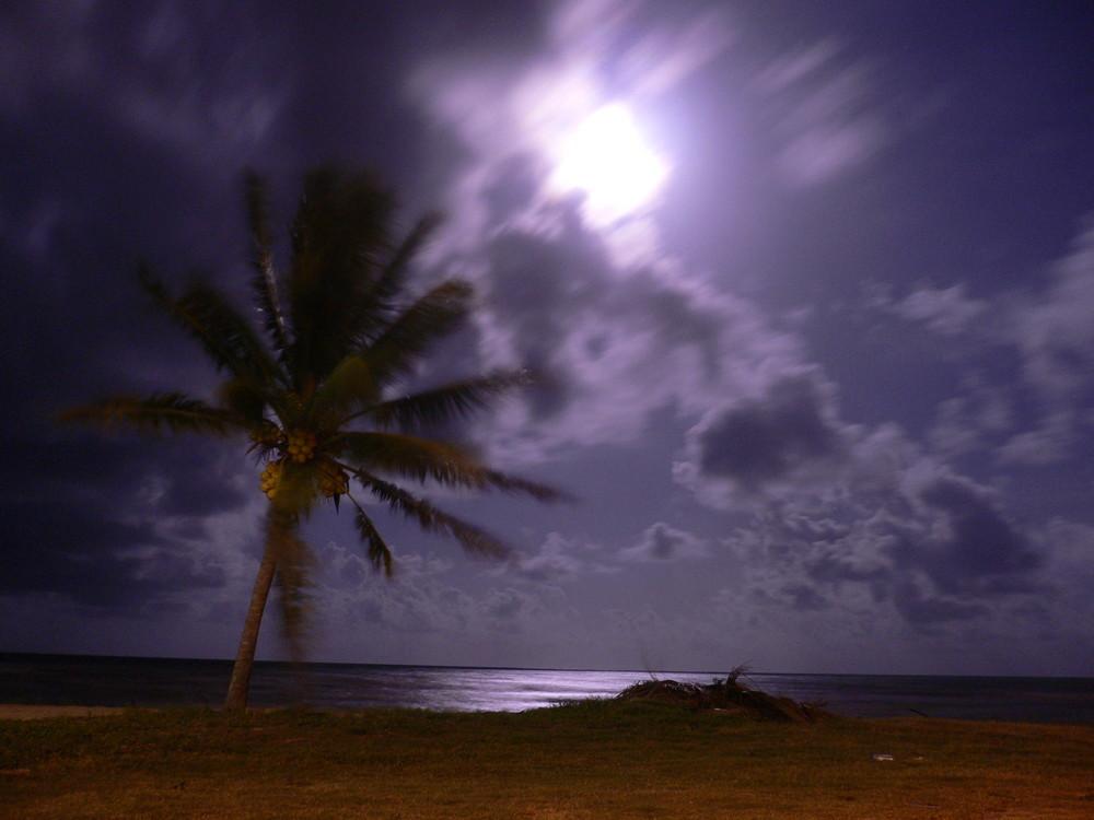 Mond Palme