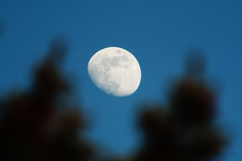 Mond, tagsüber, hinter Gestrüpp