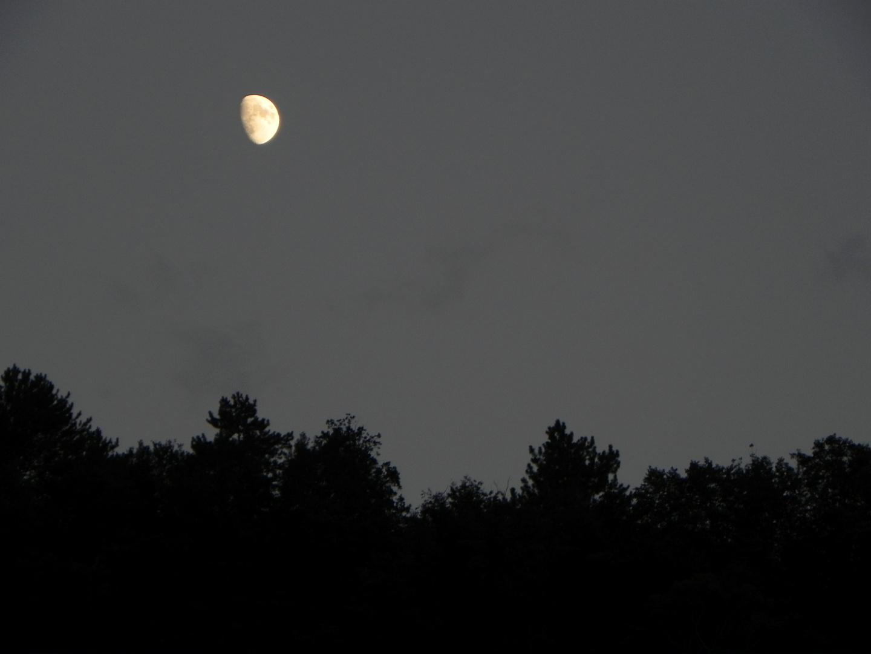 Mond über dem Bergwald