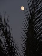 Mond über  El Gouna