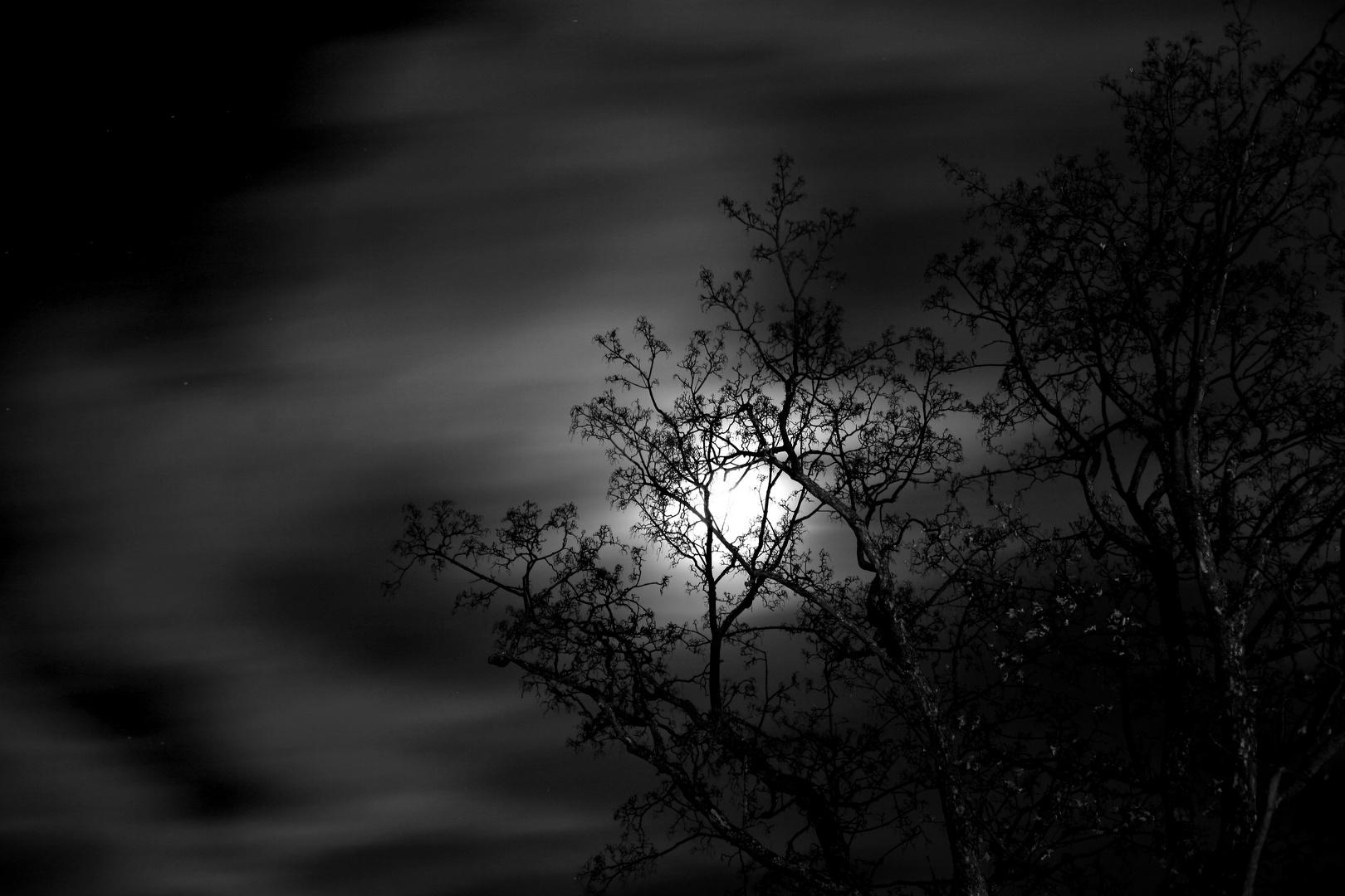 Mond über Neuhausen (Erz.)