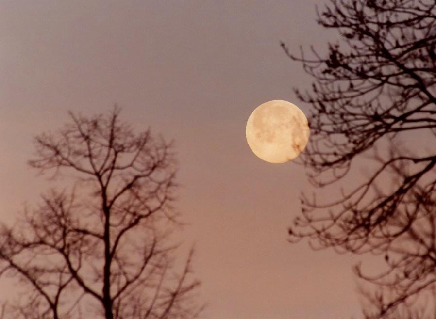 Mond und Bäume kurz vor Sonnenaufgang