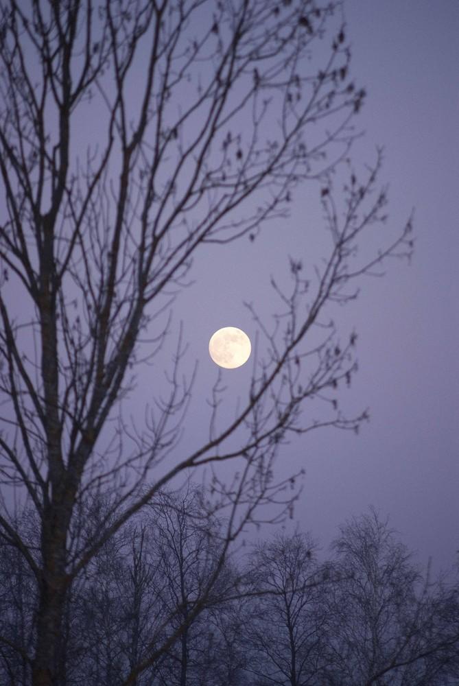 Mond zwischen den Zweigen