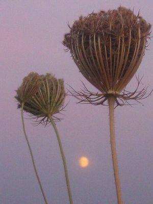 Mondaufgang...