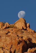 Mondaufgang mit Vogel