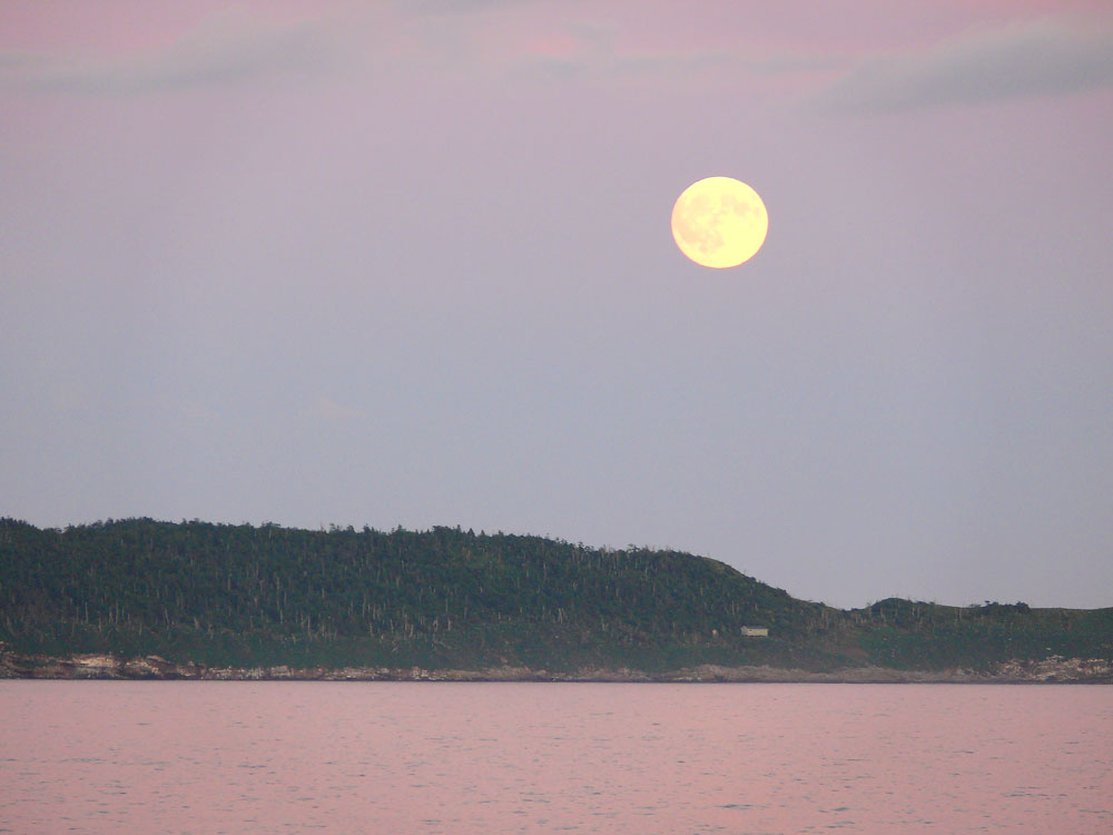 Mondaufgang über der Vogelinsel vor Wittless Bay