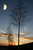 Mondbaumdämmerung