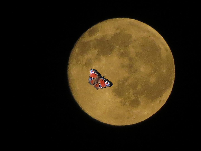 Mondbesuch